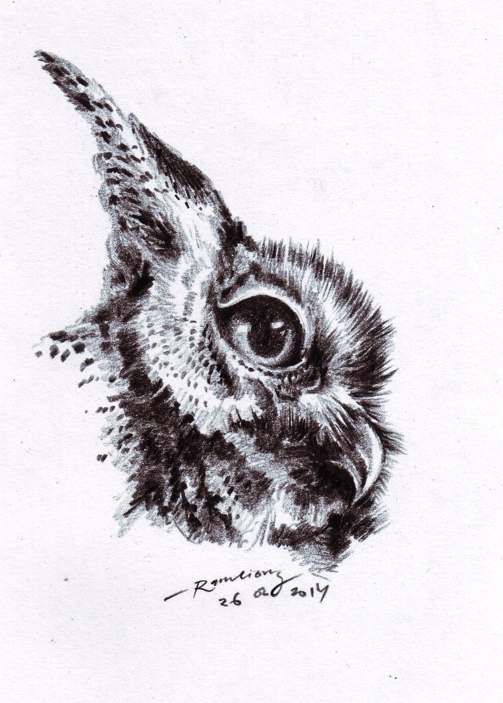 Burung Hantu Owl Dalam Drawing Gambar Www Senibenni Com