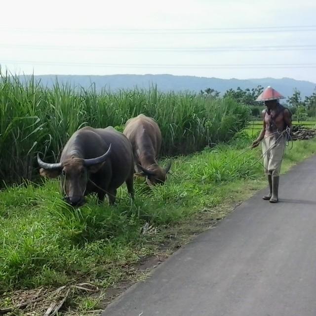 Jalan ke Kendit Panarukan Indonesia