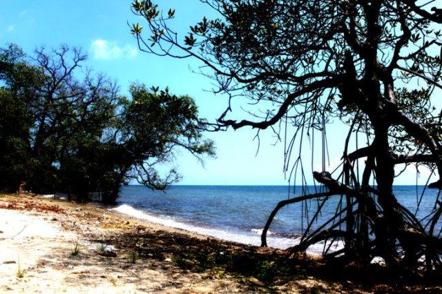 lukisan bayang-bayang pohon bakau 1
