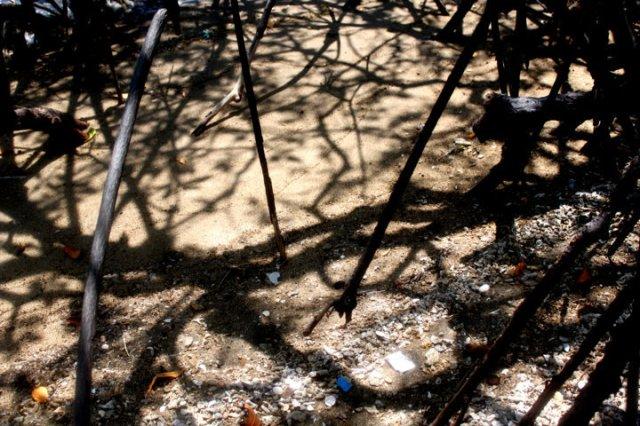 lukisan bayang-bayang pohon bakau 2
