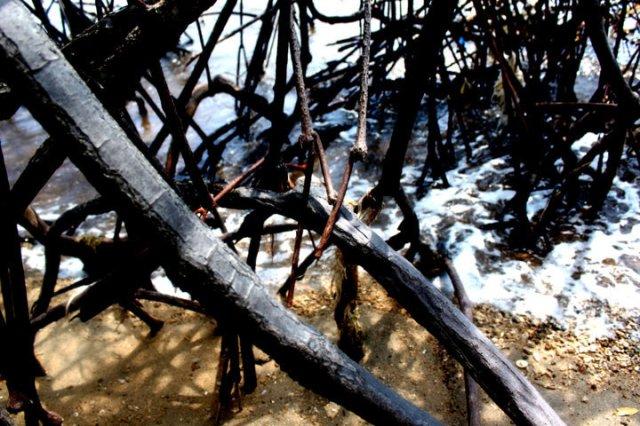 lukisan bayang-bayang pohon bakau 3