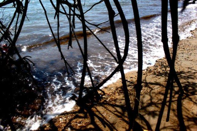 lukisan bayang-bayang pohon bakau 4