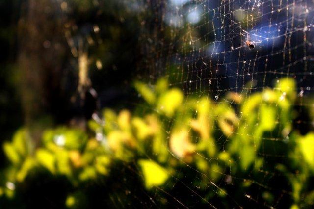 perangkap laba-laba untuk masa depan