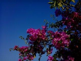 bunga kertas 11