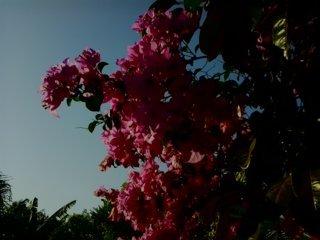 bunga kertas 13