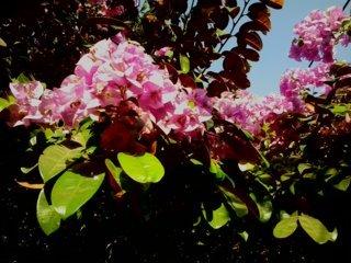 bunga kertas 4