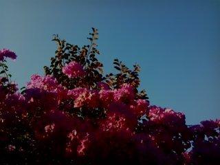 bunga kertas 6