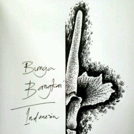 Bunga Bangkai Raflesia Drawing Www Senibenni Com