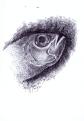 ikan mangla