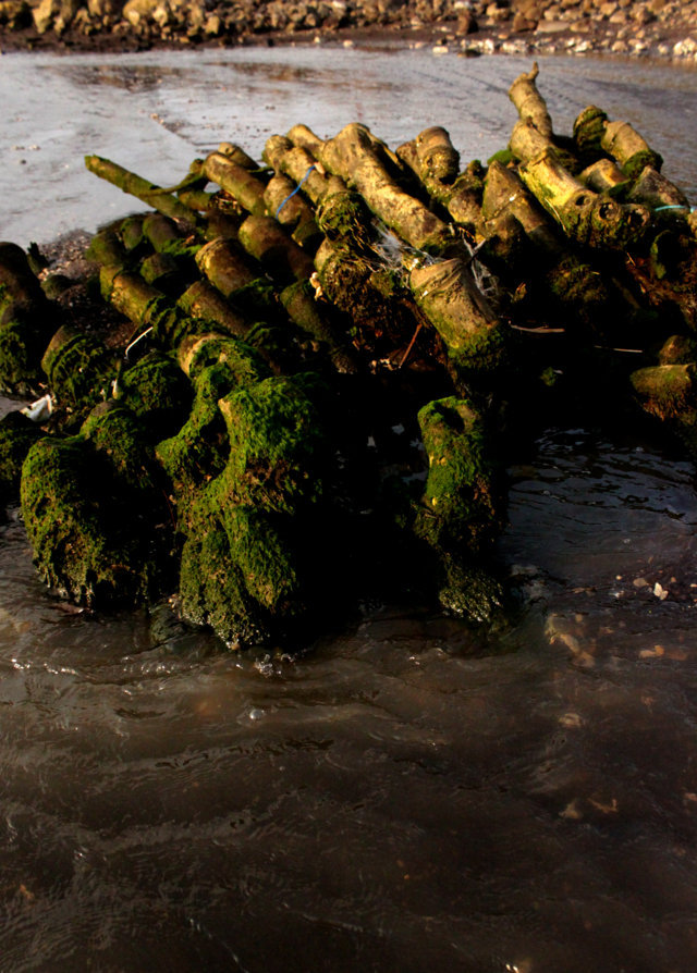 pantai patek Situbondo 13
