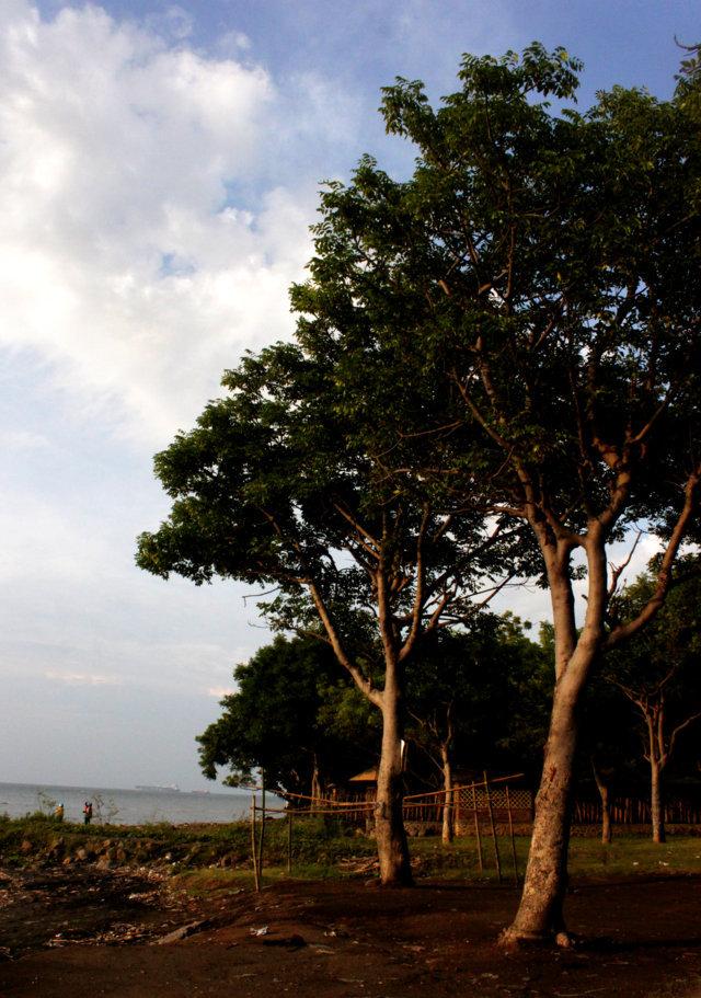 pantai patek Situbondo 17
