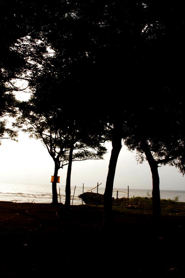 pantai patek Situbondo 19