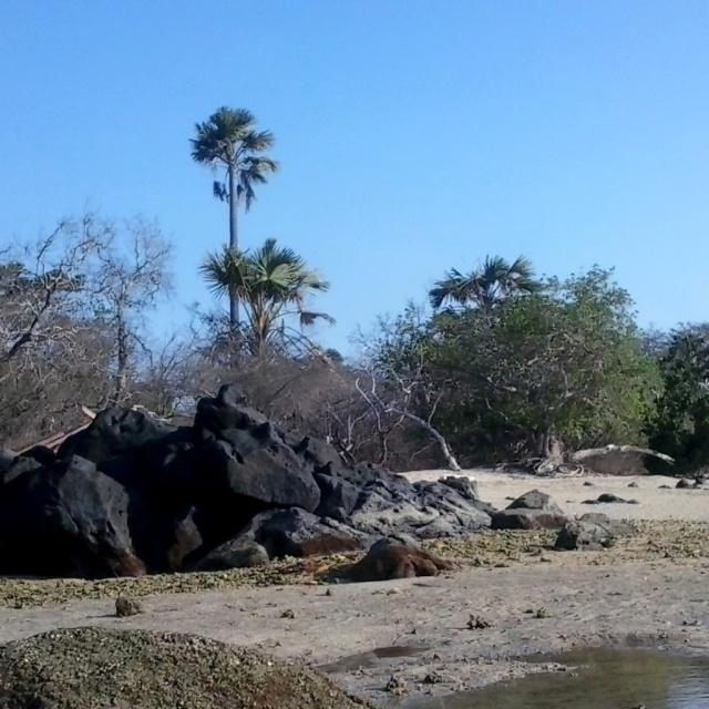 Africa Van Java pantai bama