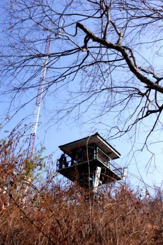 bekol baluran menara pengintai