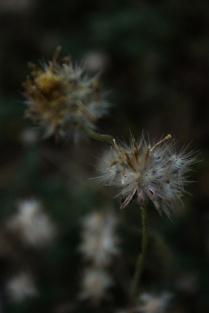 fotografi pemula