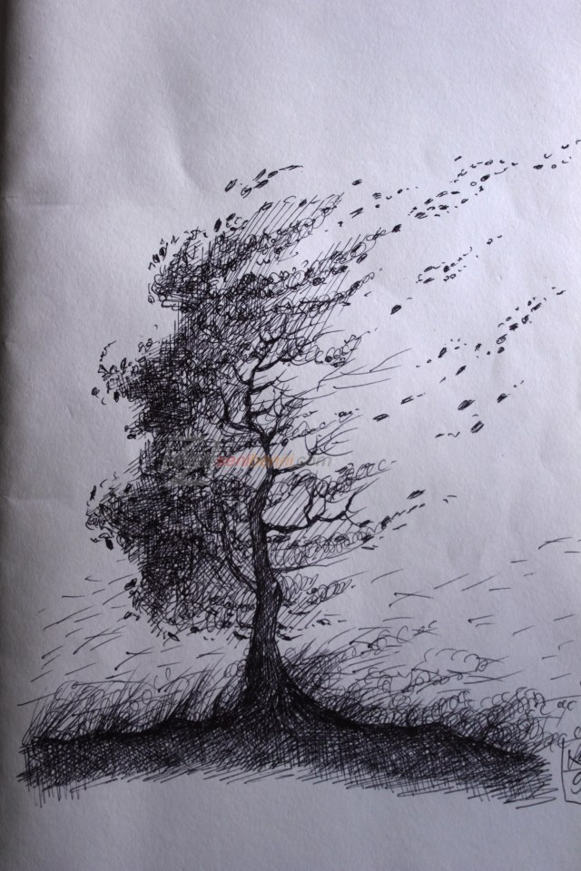 drawing ree