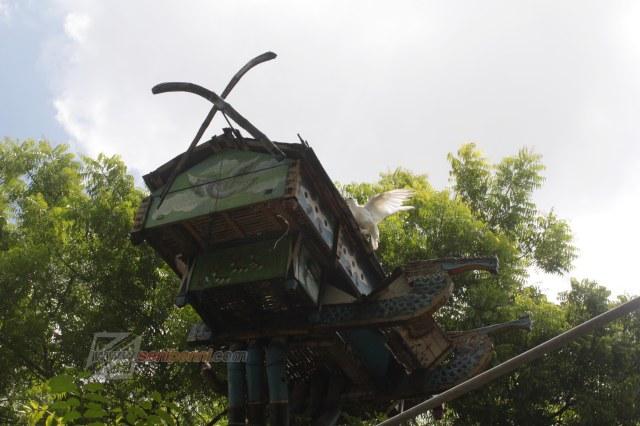 pajuduan rumah burung dara