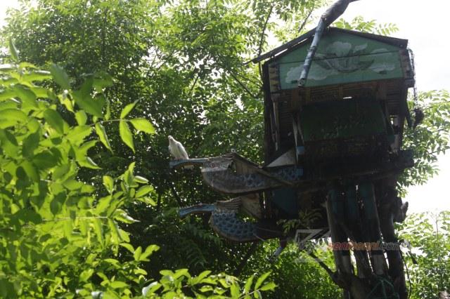 rumah burung dara