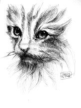drawing cat